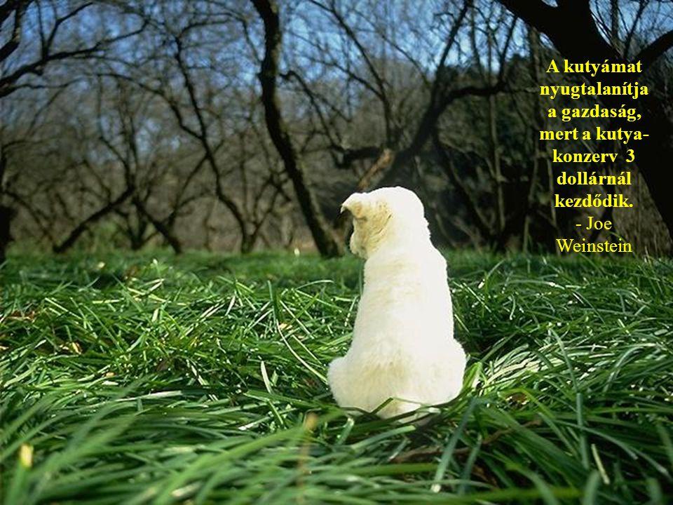 Ha egyáltalán nem hiszem a halhatatlanságot, az azt jelenti, hogy biztos a kutyák mennek a menyországba, és nagyon nagyon kevés ember. - James Thurber