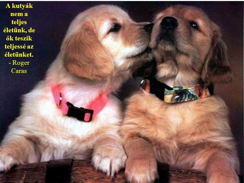 A kutyák szeretik a barátaikat és megharapják az ellenségeiket. Nem úgy mint az emberek, akik képtelenek a tiszta szeretetre és mindig együtt van benn