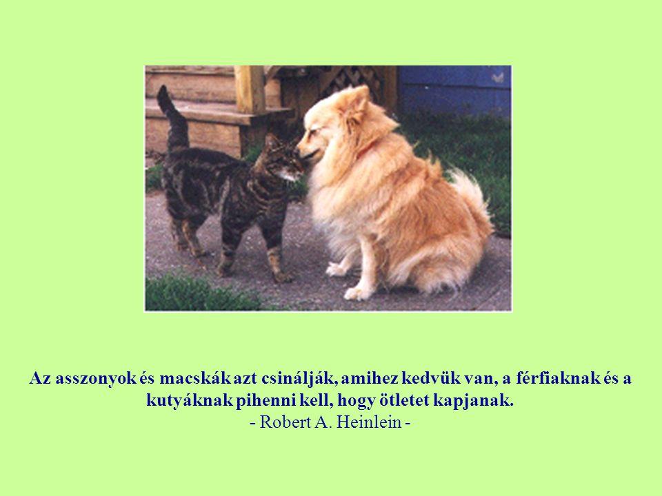 Azért van a kutyáknak olyan sok barátjuk, mert a farkukat mozgatják a nyelvük helyett. - Anonymous -