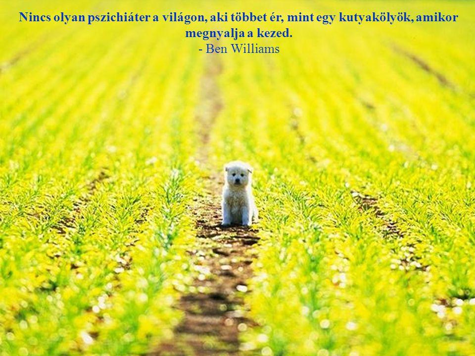 Ha megetetsz egy éhező kutyát és jóllakottá teszed, nem fog megharapni, ez az alapvető különbség a kutya és az ember között. - Mark Twain -