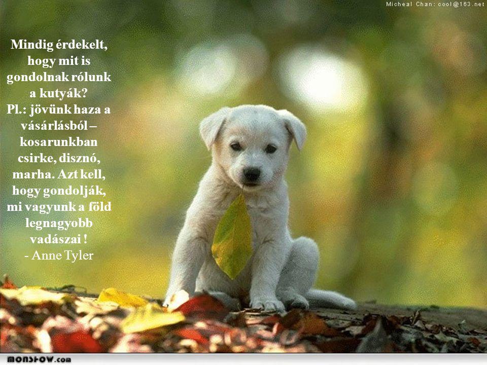 Csodálom, hogy más kutyák azt hiszik, hogy a pudli egy őrült vallás tagja.. - Rita Rudner -