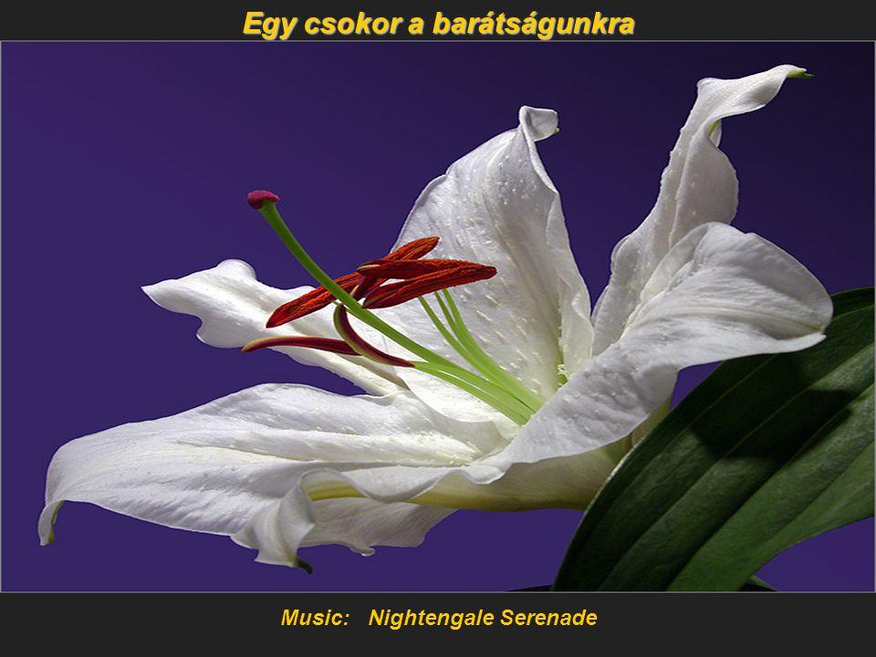 Music: Nightengale Serenade Egy csokor a barátságunkra