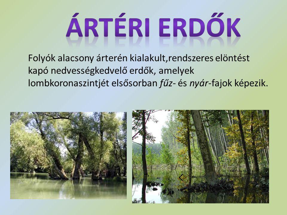 Folyók alacsony árterén kialakult,rendszeres elöntést kapó nedvességkedvelő erdők, amelyek lombkoronaszintjét elsősorban fűz- és nyár-fajok képezik.