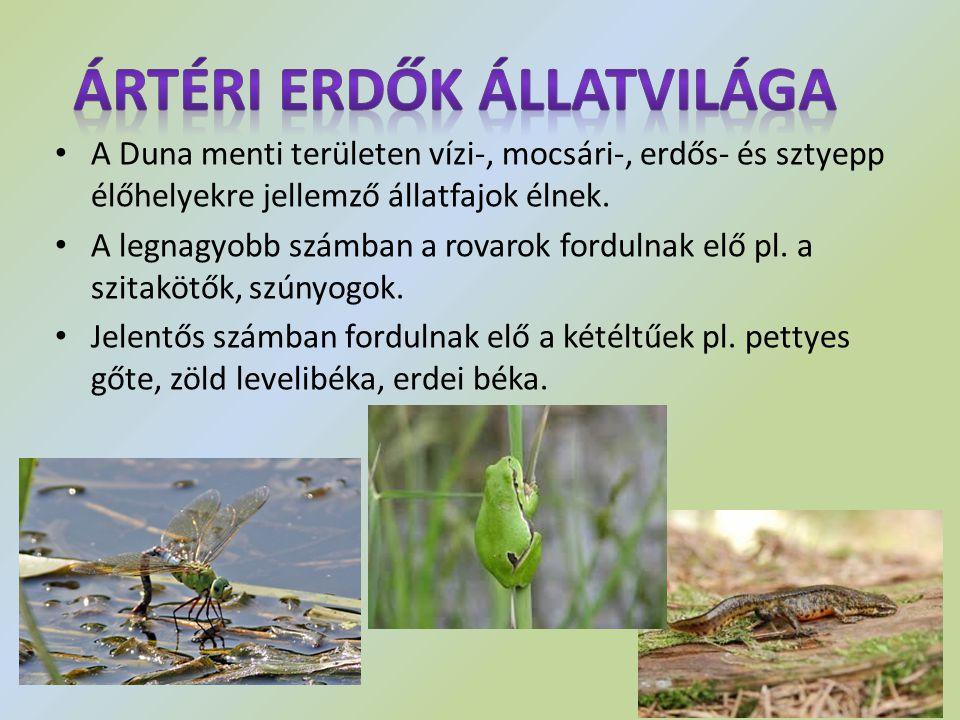 A Duna menti területen vízi-, mocsári-, erdős- és sztyepp élőhelyekre jellemző állatfajok élnek. A legnagyobb számban a rovarok fordulnak elő pl. a sz