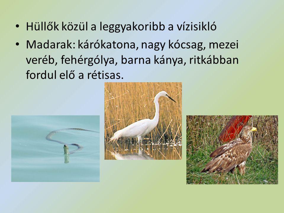 Hüllők közül a leggyakoribb a vízisikló Madarak: kárókatona, nagy kócsag, mezei veréb, fehérgólya, barna kánya, ritkábban fordul elő a rétisas.