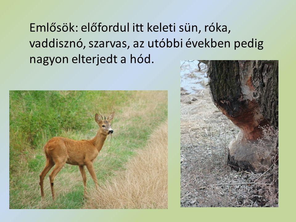 Emlősök: előfordul itt keleti sün, róka, vaddisznó, szarvas, az utóbbi években pedig nagyon elterjedt a hód.
