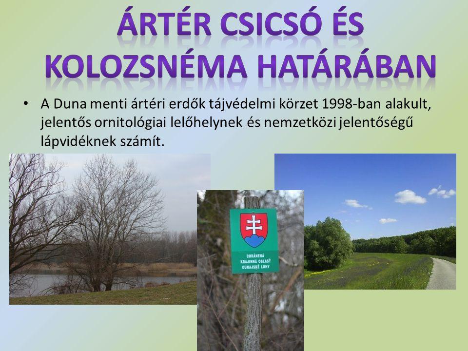 A Duna menti ártéri erdők tájvédelmi körzet 1998-ban alakult, jelentős ornitológiai lelőhelynek és nemzetközi jelentőségű lápvidéknek számít.