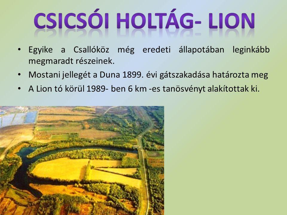 Egyike a Csallóköz még eredeti állapotában leginkább megmaradt részeinek. Mostani jellegét a Duna 1899. évi gátszakadása határozta meg A Lion tó körül