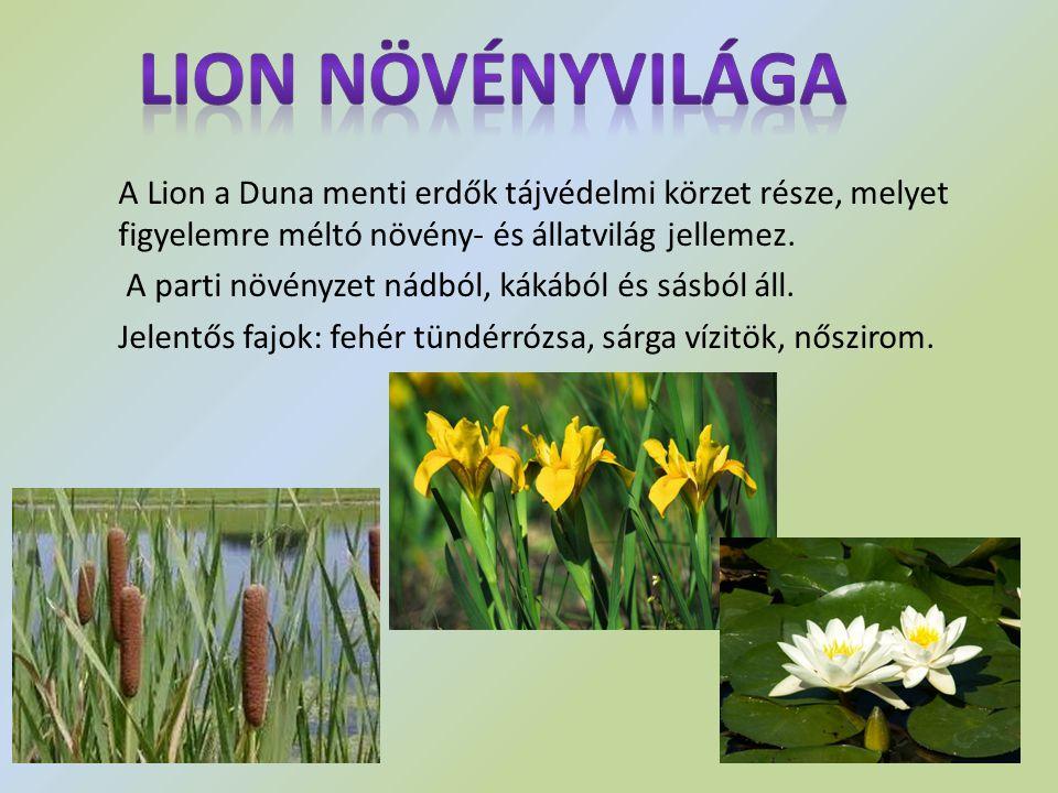 A Lion a Duna menti erdők tájvédelmi körzet része, melyet figyelemre méltó növény- és állatvilág jellemez. A parti növényzet nádból, kákából és sásból