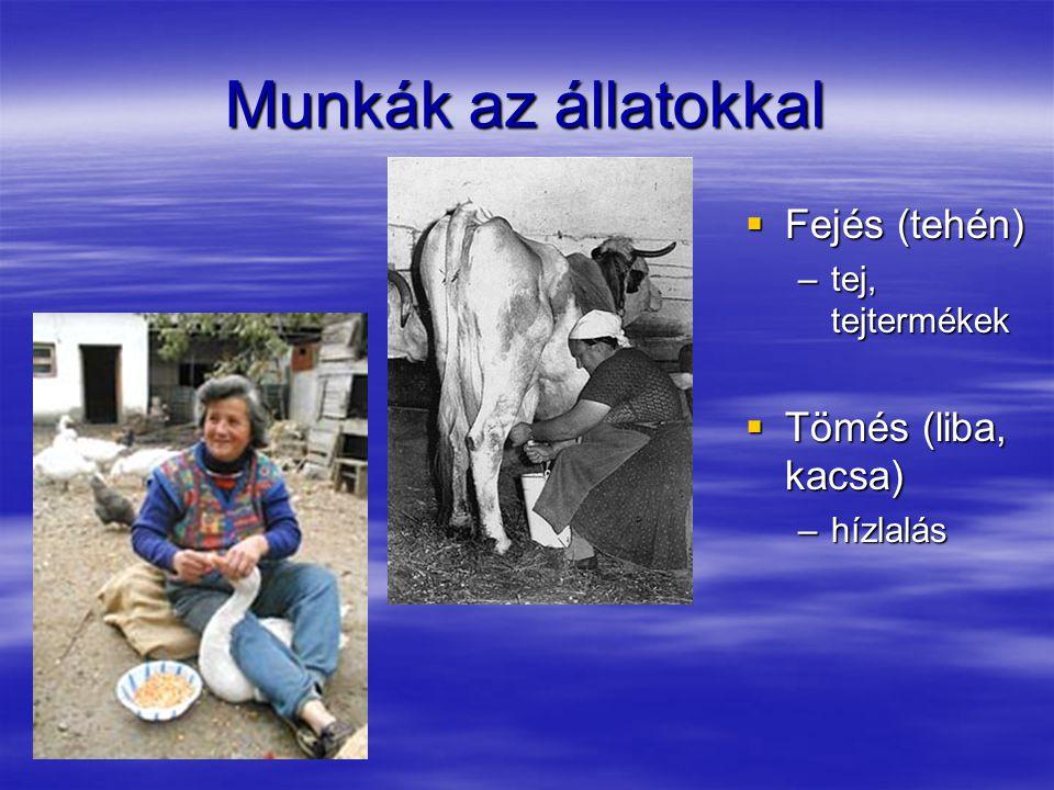 Munkák az állatokkal  Fejés (tehén) –tej, tejtermékek  Tömés (liba, kacsa) –hízlalás