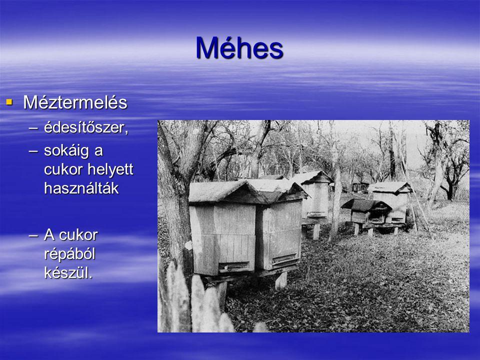 Méhes  Méztermelés –édesítőszer, –sokáig a cukor helyett használták –A cukor répából készül.