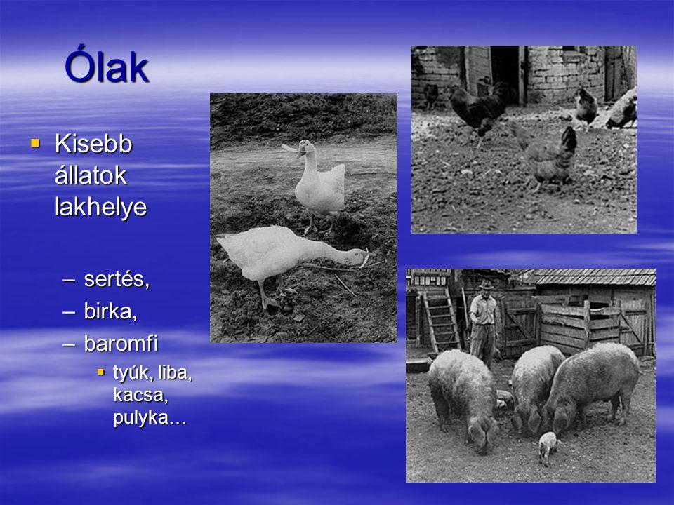 Ólak Ólak  Kisebb állatok lakhelye –sertés, –birka, –baromfi  tyúk, liba, kacsa, pulyka…