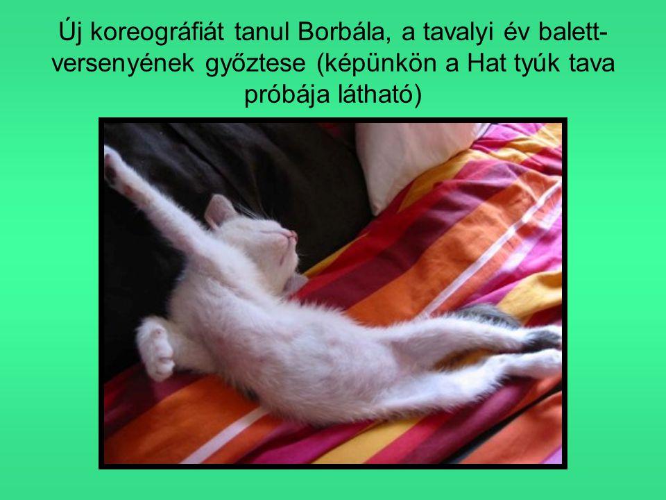 Új koreográfiát tanul Borbála, a tavalyi év balett- versenyének győztese (képünkön a Hat tyúk tava próbája látható)