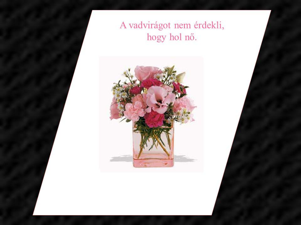 A virág Isten legédesebb teremtménye, melybe elfelejtett lelket lehelni.