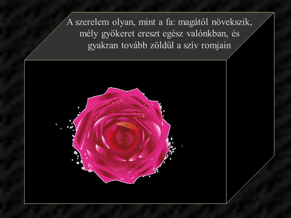 A szerelem gyönyörűséges virág, csak az a baj, hogy szakadék szélén terem.
