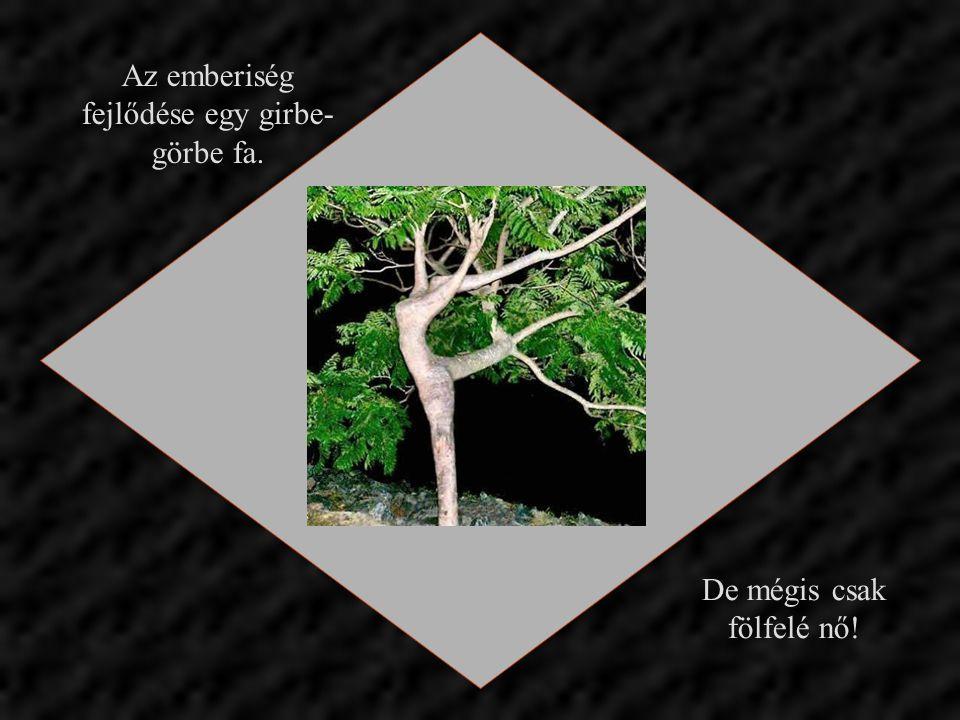 Az emberiség fejlődése egy girbe- görbe fa. De mégis csak fölfelé nő!