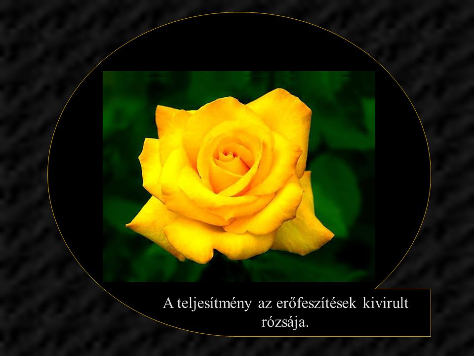 A rózsát keresve esetleg elmegyünk az ibolya mellett. A sikert hajszolva esetleg elmegyünk az örömök mellett.