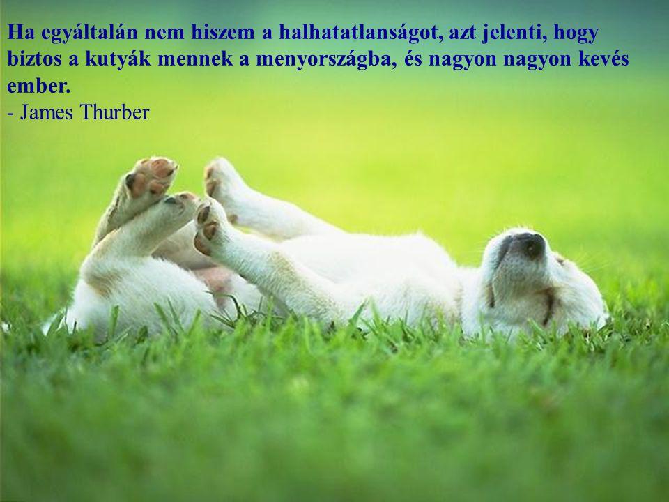 Mindenki, aki nem tudja, hogy izlik a szappan, soha nem mosdatott egy kutyát sem. - Franklin P. Jones