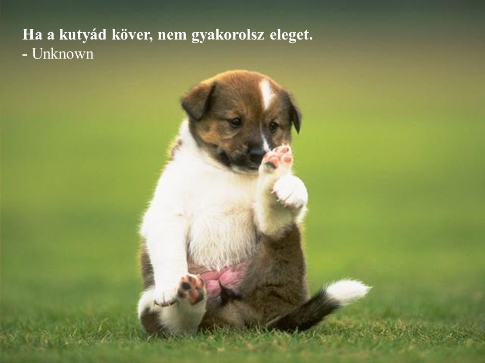A kutyámat nyugtalanítja a gazdaság, mert a kutya ennivaló konzerv $3 dollárnal kezdődik. - Joe Weinstein