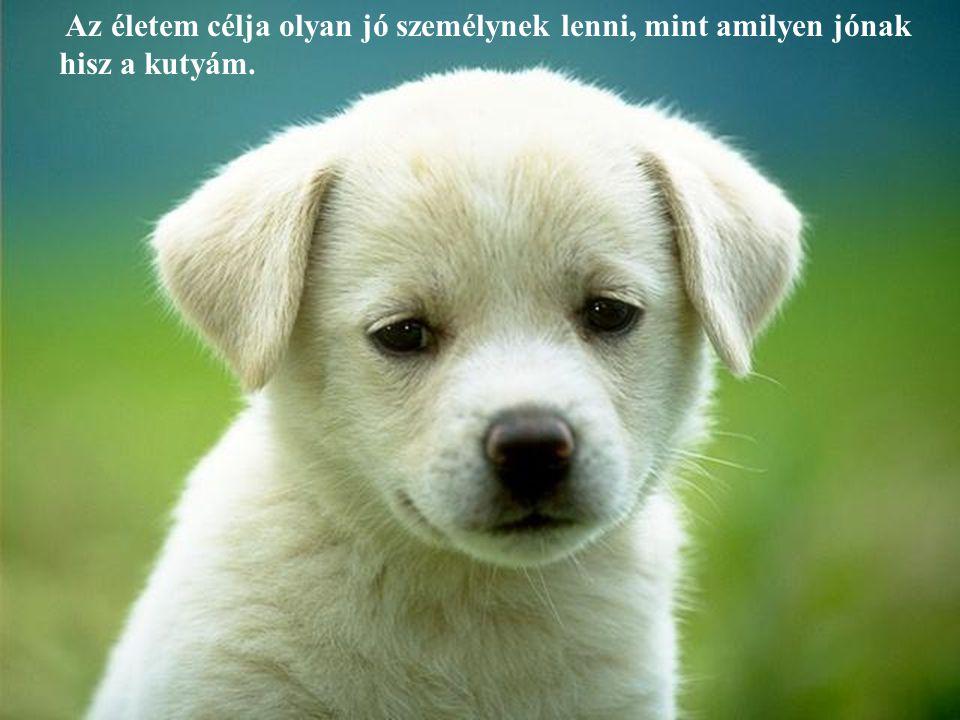 Ha a kutyád köver, nem gyakorolsz eleget. - Unknown