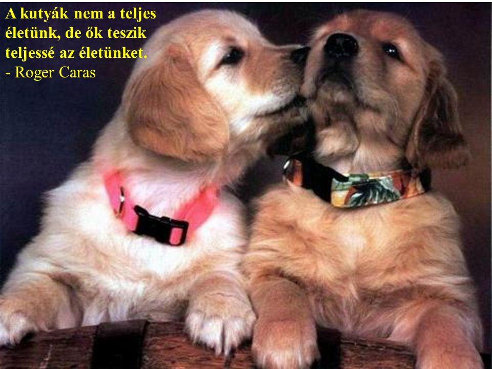 A kutyák szeretik a baratáikat és megharapják az ellenségeiket, nem úgy mint az emberek, akik képtelenek a tiszta szeretetre és mindig van bennük együ