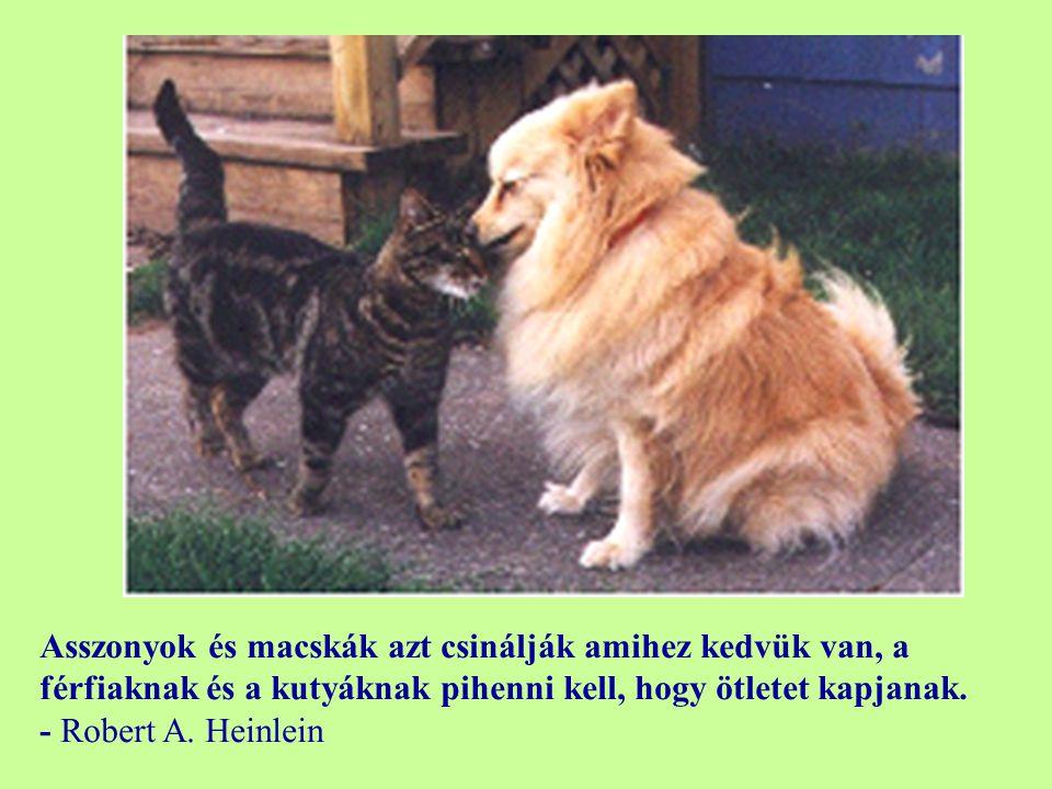 Azért van a kutyéknak olyan sok barétjuk, mert a farkukat mozgatják a nyelveik helyett. - Anonymous
