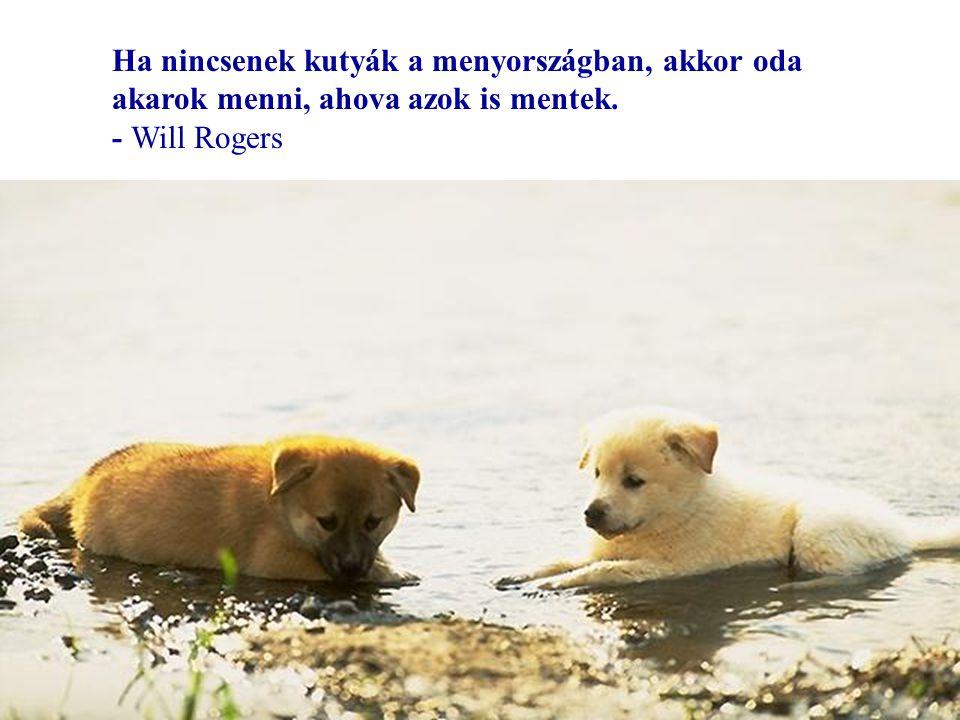 Kutyákról és emberekről…
