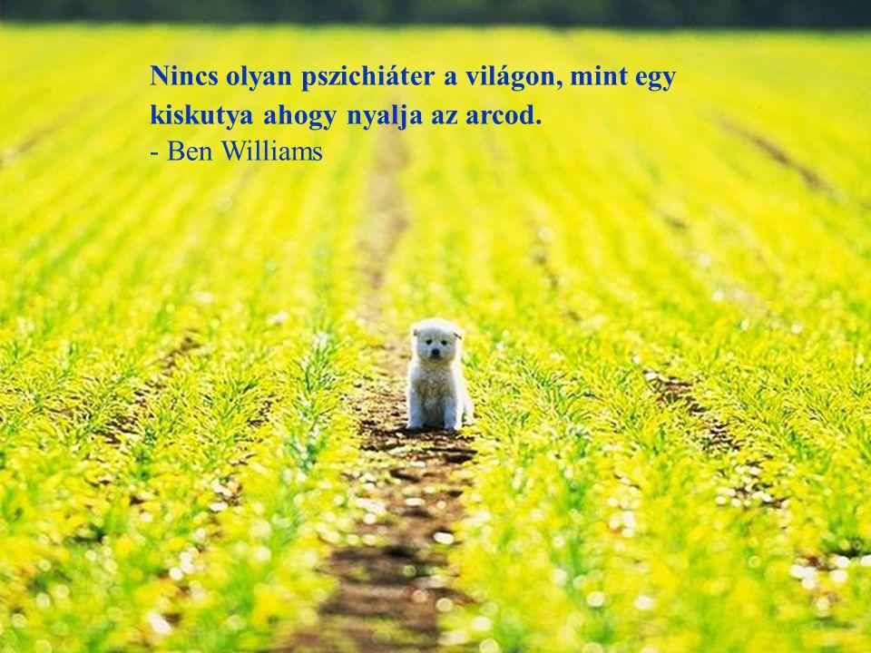 Ha felveszel egy éhező kutyát és jóllakottá teszed, nem fog megharapni, ez az alapvető különbség a kutya és az ember között. - Mark Twain