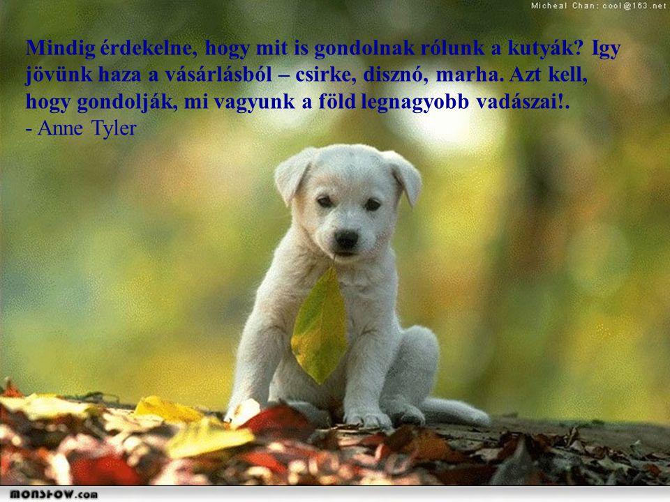 Csodálom, hogy más kutyák azt hiszik, hogy a pudli egy őrült vallás tagja.. - Rita Rudner