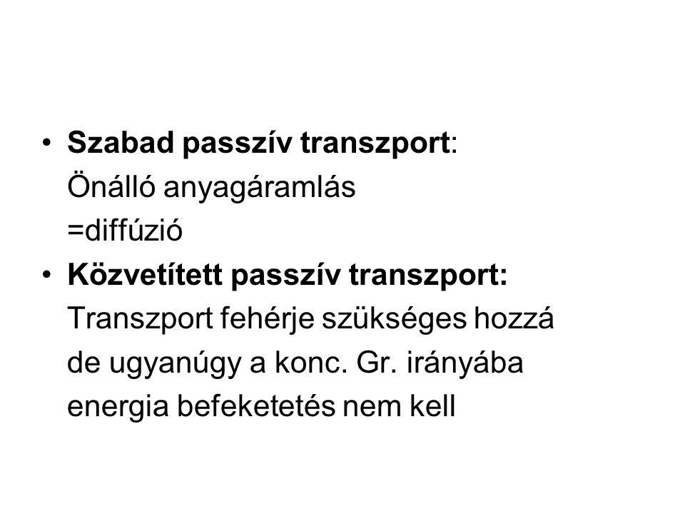Szabad passzív transzport: Önálló anyagáramlás =diffúzió Közvetített passzív transzport: Transzport fehérje szükséges hozzá de ugyanúgy a konc. Gr. ir