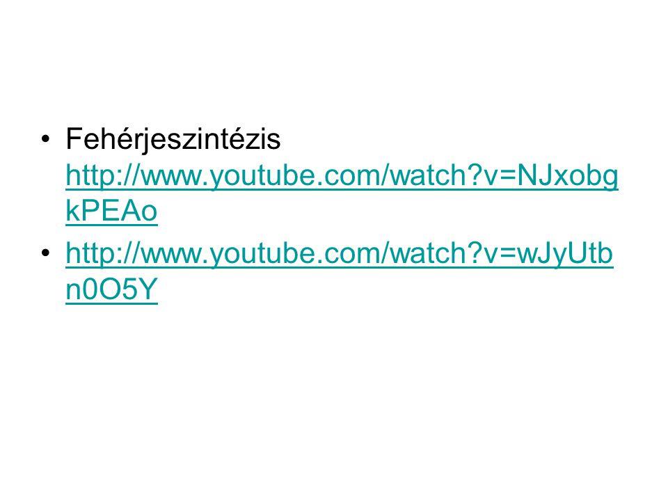 Fehérjeszintézis http://www.youtube.com/watch?v=NJxobg kPEAo http://www.youtube.com/watch?v=NJxobg kPEAo http://www.youtube.com/watch?v=wJyUtb n0O5Yht