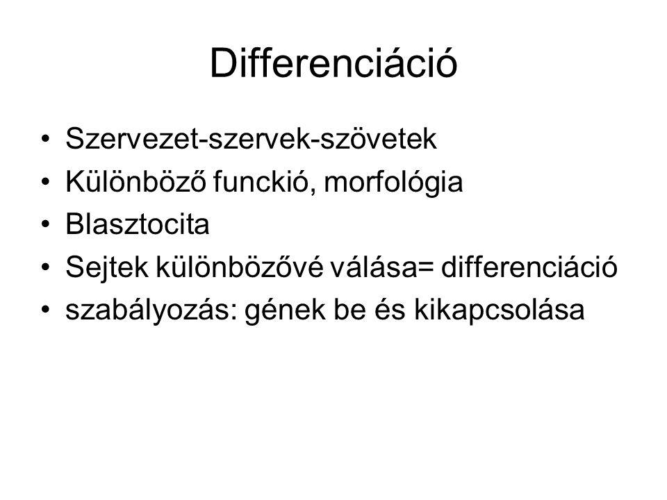 Differenciáció Szervezet-szervek-szövetek Különböző funckió, morfológia Blasztocita Sejtek különbözővé válása= differenciáció szabályozás: gének be és
