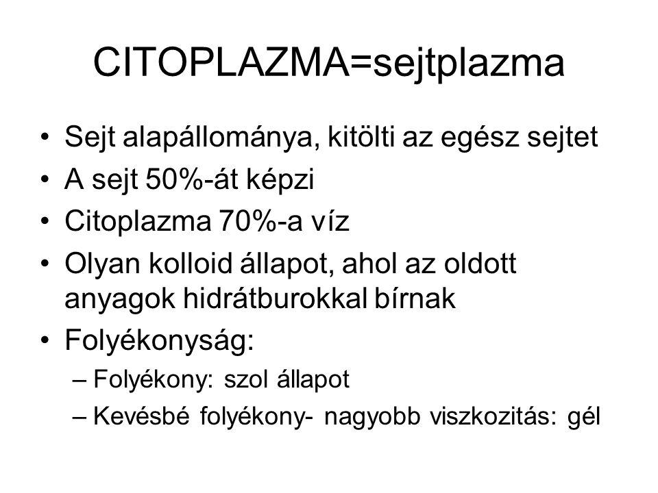 CITOPLAZMA=sejtplazma Sejt alapállománya, kitölti az egész sejtet A sejt 50%-át képzi Citoplazma 70%-a víz Olyan kolloid állapot, ahol az oldott anyag
