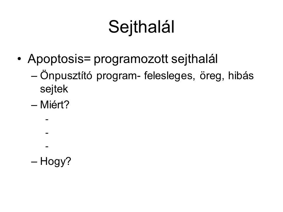 Sejthalál Apoptosis= programozott sejthalál –Önpusztító program- felesleges, öreg, hibás sejtek –Miért? - –Hogy?