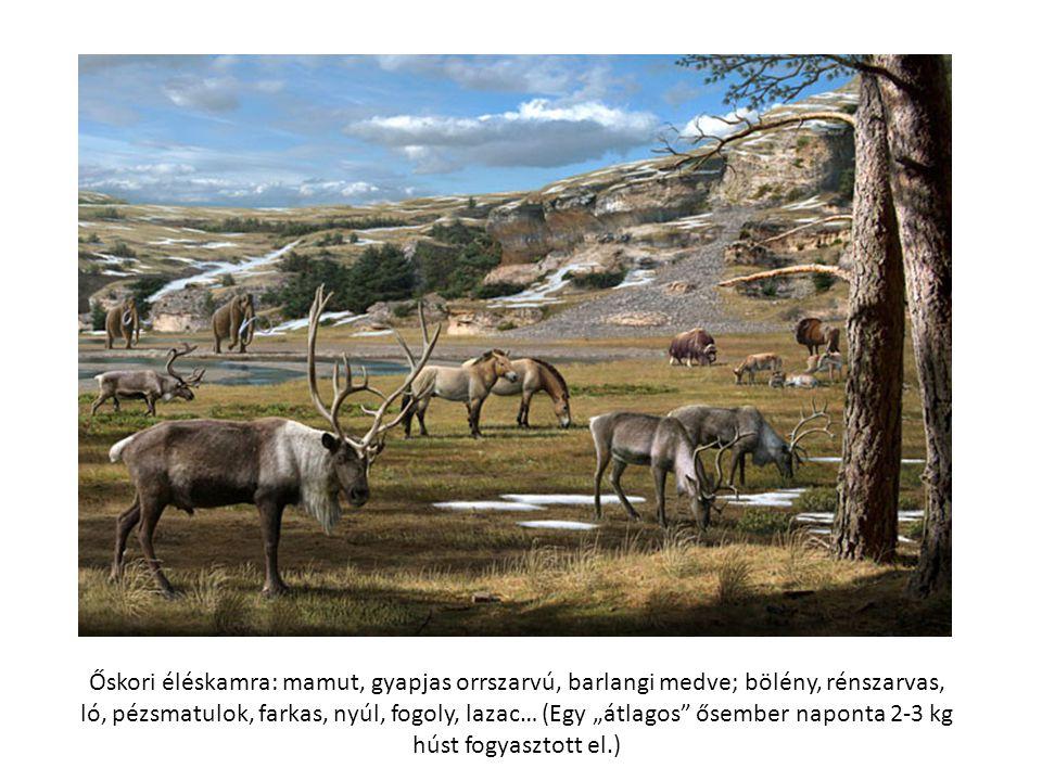 """Őskori éléskamra: mamut, gyapjas orrszarvú, barlangi medve; bölény, rénszarvas, ló, pézsmatulok, farkas, nyúl, fogoly, lazac… (Egy """"átlagos"""" ősember n"""