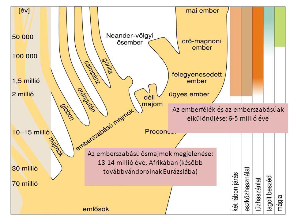 Az emberfélék és az emberszabásúak elkülönülése: 6-5 millió éve Az emberszabású ősmajmok megjelenése: 18-14 millió éve, Afrikában (később továbbvándor