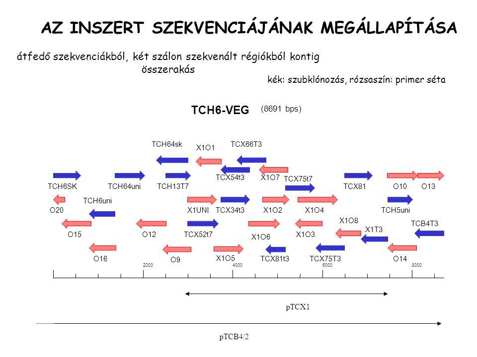 AZ INSZERT SZEKVENCIÁJÁNAK MEGÁLLAPÍTÁSA TCH6-VEG (8691 bps) 2000400060008000 TCH6SK O20 O15 TCH64uni TCH6uni O16 TCH13T7 O12 X1UNI TCX52t7 TCH64sk O9