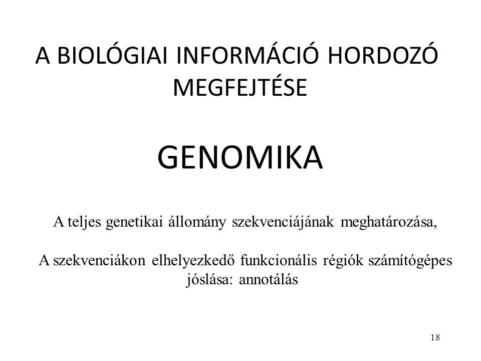 18 A BIOLÓGIAI INFORMÁCIÓ HORDOZÓ MEGFEJTÉSE GENOMIKA A teljes genetikai állomány szekvenciájának meghatározása, A szekvenciákon elhelyezkedő funkcion