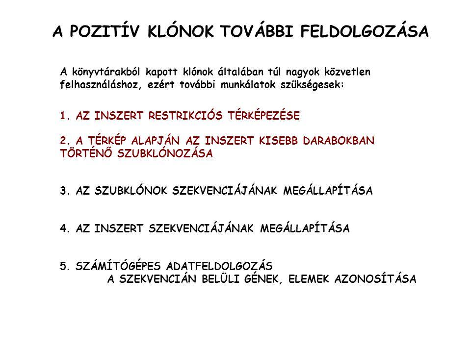 RESTRIKCIÓS TÉRKÉPEZÉS