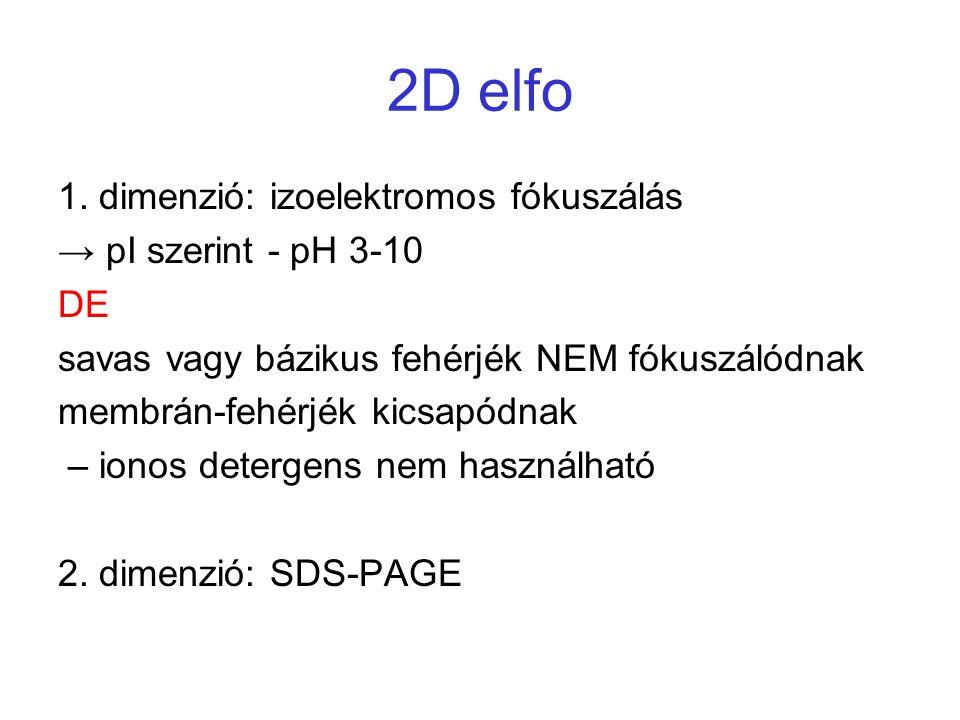 2D elfo 1. dimenzió: izoelektromos fókuszálás → pI szerint - pH 3-10 DE savas vagy bázikus fehérjék NEM fókuszálódnak membrán-fehérjék kicsapódnak – i