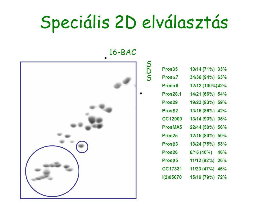 Speciális 2D elválasztás 16-BAC SDSSDS Pros3510/14 (71%)33% Pros  734/36 (94%)63% Pros  612/12 (100%)42% Pros28.114/21 (66%)54% Pros2919/23 (83%)59%