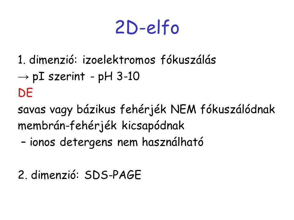 2D-elfo 1. dimenzió: izoelektromos fókuszálás → pI szerint - pH 3-10 DE savas vagy bázikus fehérjék NEM fókuszálódnak membrán-fehérjék kicsapódnak – i