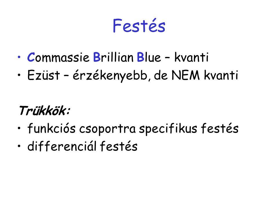 Festés Commassie Brillian Blue – kvanti Ezüst – érzékenyebb, de NEM kvanti Trükkök: funkciós csoportra specifikus festés differenciál festés