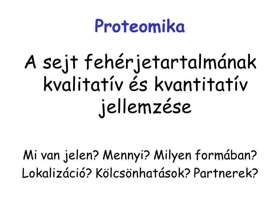Proteomika A sejt fehérjetartalmának kvalitatív és kvantitatív jellemzése Mi van jelen? Mennyi? Milyen formában? Lokalizáció? Kölcsönhatások? Partnere