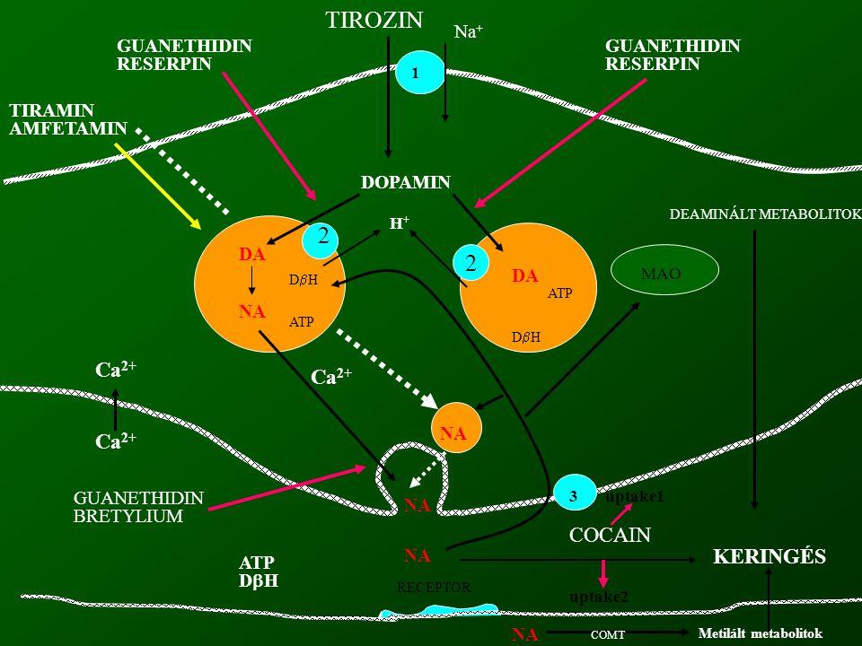 DOPAMIN DA NA 2 2 DA DHDH DHDH ATP MAO H+H+ NA 1 3 TIROZIN Na + GUANETHIDIN RESERPIN TIRAMIN AMFETAMIN RECEPTOR COCAIN GUANETHIDIN RESERPIN GUANET