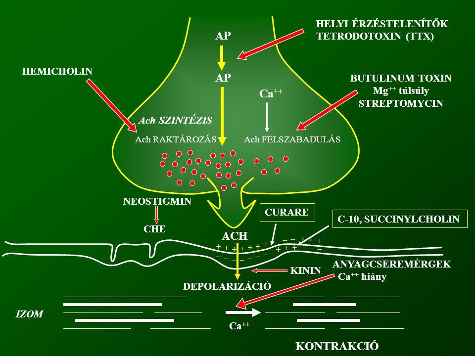 Ach SZINTÉZIS Ach RAKTÁROZÁS AP Ca ++ Ach FELSZABADULÁS HELYI ÉRZÉSTELENÍTŐK TETRODOTOXIN (TTX) BUTULINUM TOXIN Mg ++ túlsúly STREPTOMYCIN HEMICHOLIN