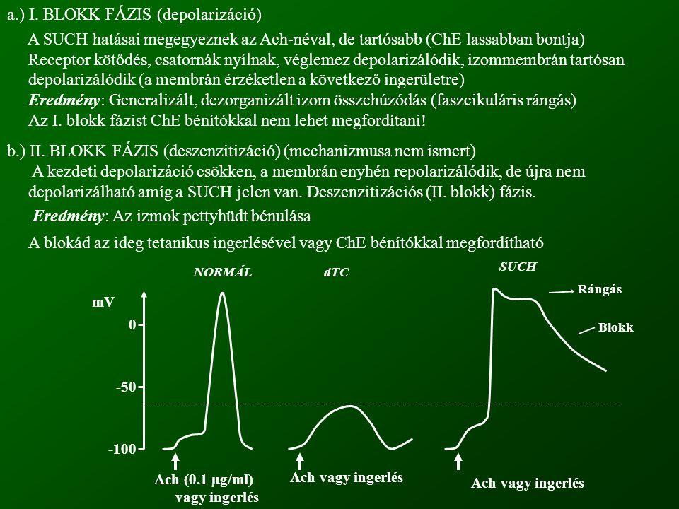 -100 -50 0 NORMÁLdTC SUCH Rángás Blokk Ach (0.1 µg/ml) vagy ingerlés Ach vagy ingerlés mV a.) I. BLOKK FÁZIS (depolarizáció) A SUCH hatásai megegyezne