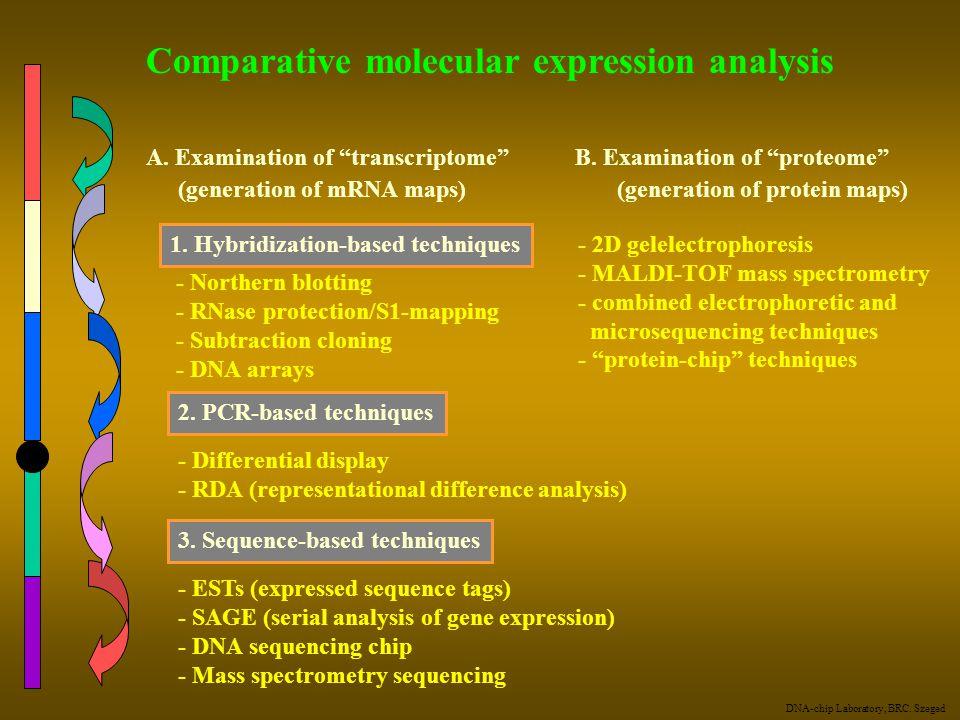 "Comparative molecular expression analysis A. Examination of ""transcriptome"" B. Examination of ""proteome"" (generation of mRNA maps) (generation of prot"