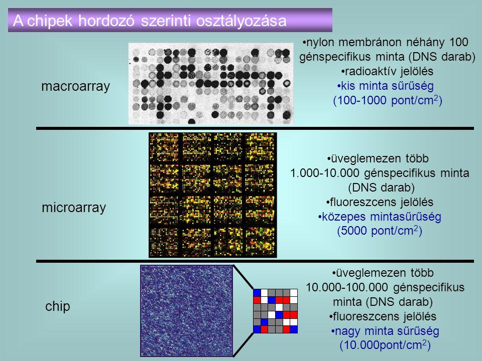macroarray nylon membránon néhány 100 génspecifikus minta (DNS darab) radioaktív jelölés kis minta sűrűség (100-1000 pont/cm 2 ) microarray üveglemeze