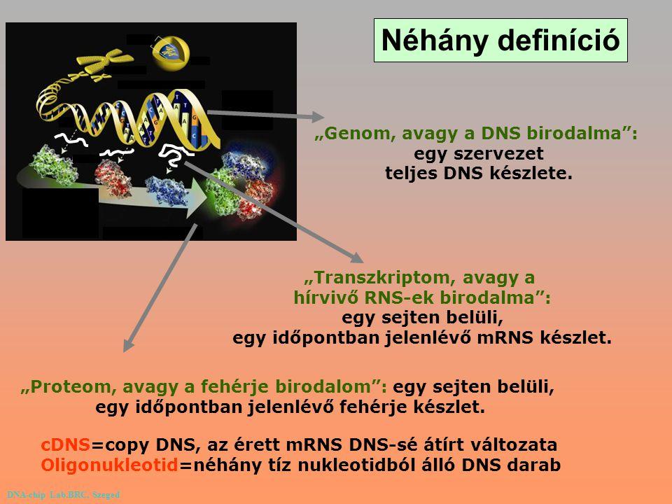 """""""Genom, avagy a DNS birodalma"""": egy szervezet teljes DNS készlete. """"Transzkriptom, avagy a hírvivő RNS-ek birodalma"""": egy sejten belüli, egy időpontba"""